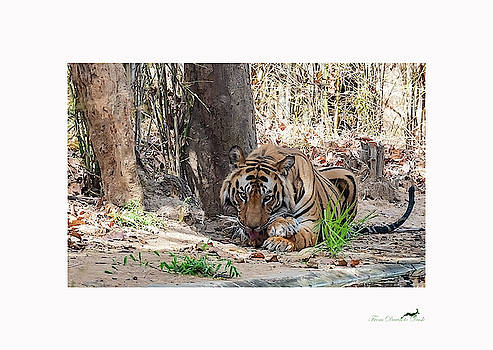 The Tiger's Perspective - II by From Dawn To Dusk Natural History Photography