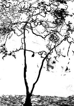 Sharon Williams Eng - The Tree Black and White Drawing 300