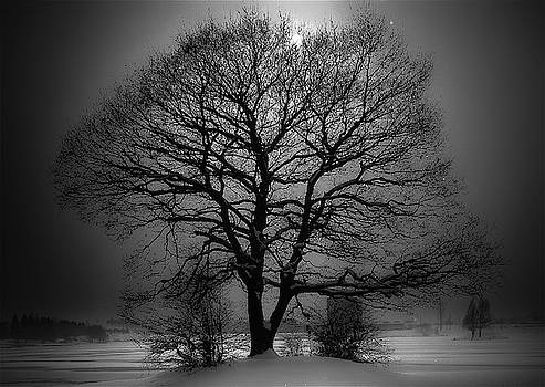 The Tree by S J Bryant