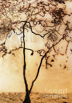 Sharon Williams Eng - The Tree Sepia 300