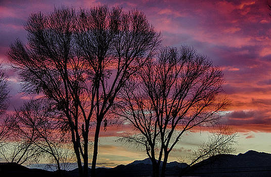 The trees know sunset by Gaelyn Olmsted