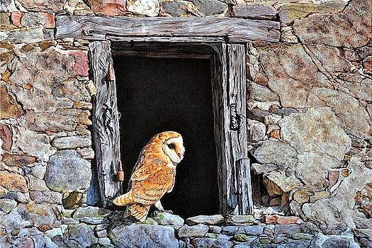 The Visitor - Barn Owl by Alan M Hunt by Alan M Hunt