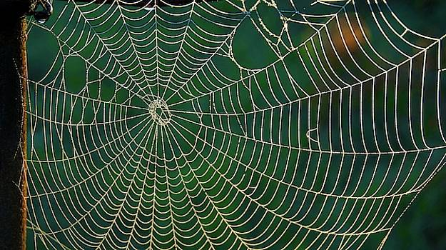 The Web by Bryan Smith