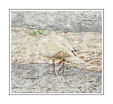 The White Dove by Lenore Senior