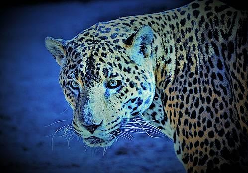 The wild Cat by Savannah Gibbs