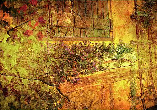 The window box by Eagle Finegan