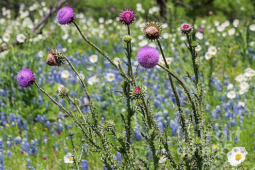 Thistle and wildflowers by Paul Quinn