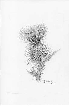 Thistle by Brenda Hill