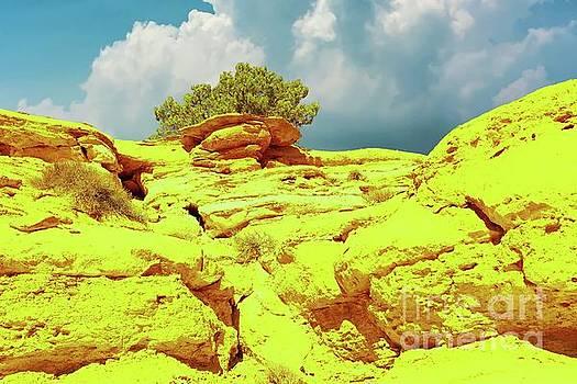 The desert near Moab by Jeff Swan
