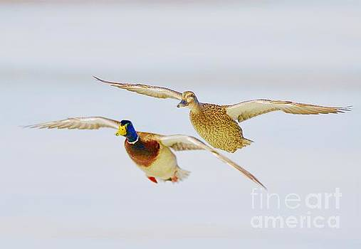 Those who fly together by Robert Pearson
