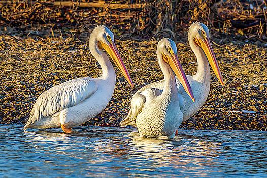 Three Amigos by David Wagenblatt