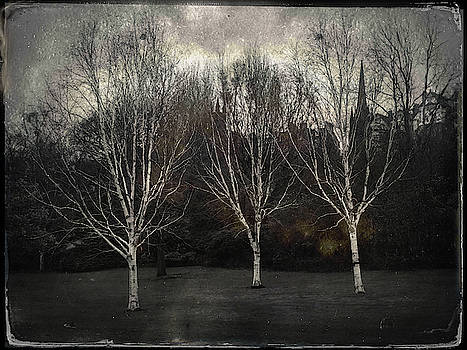 Three Birch Trees by Dave Bowman