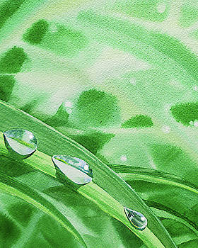 Three Dew Drops Realism In Watercolor by Irina Sztukowski