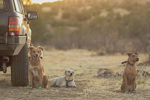 Julieta Belmont - Three dogs chilling