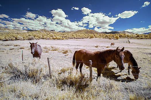 Jon Glaser - Three Horses in Colorado