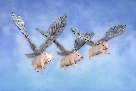 Three Little Pigs  by Betsy Knapp