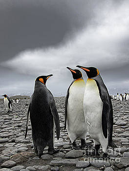 Three Penquins by Patti Schulze