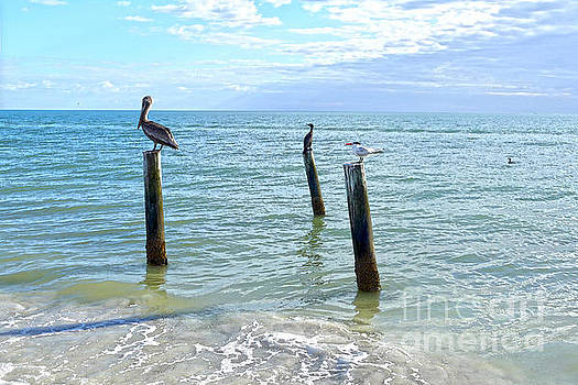 Three Shorebirds in Florida by Catherine Sherman