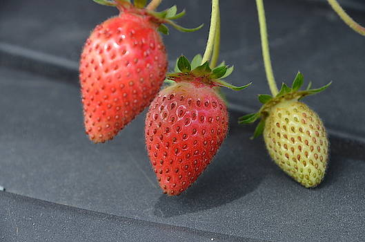 Three Strawberries by Norman Burnham