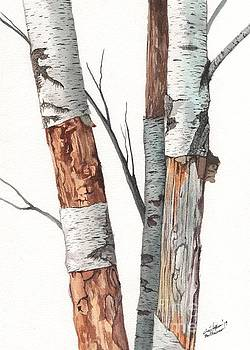 Three Wild Birch Trees in watercolor by Christopher Shellhammer