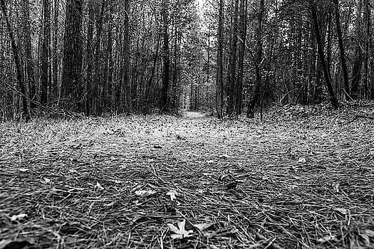 Through the Forest by Doug Camara