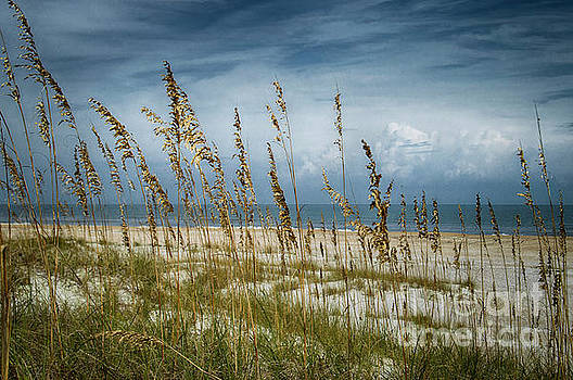 Through the Sea Oats by Judy Hall-Folde