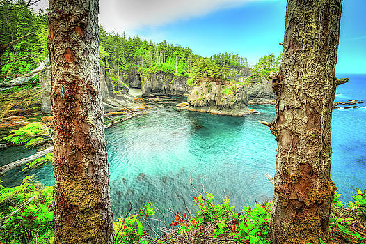 Through the Trees at Cape Flattery by Spencer McDonald