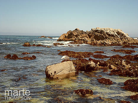 Tidepools at Pacific Grove by Marte Thompson
