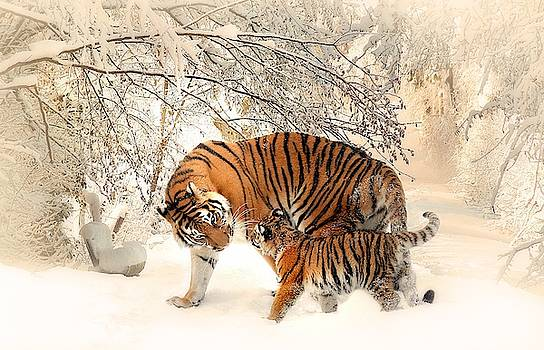 Tiger family by Top Wallpapers