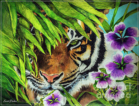 Tiger Lily by Scott Parker