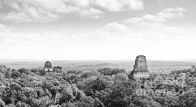Tim Hester - Tikal Guatemala Mayan Ruins Black and White