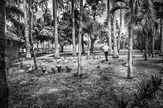Sharon Popek - Time to Feed the Chickens black and white