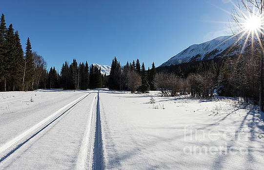 Tire tracks in snow in an isolated area of the Kenai Peninsula by Louise Heusinkveld