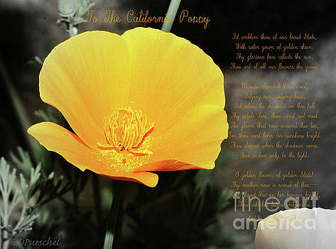 To The California Poppy by Debby Pueschel
