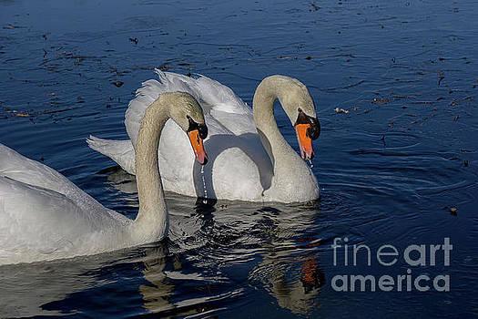 Together Forever by Linda Howes