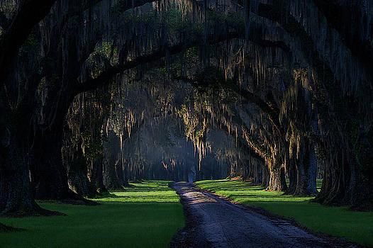 Tomotley Avenue of Oaks  by Jon Glaser