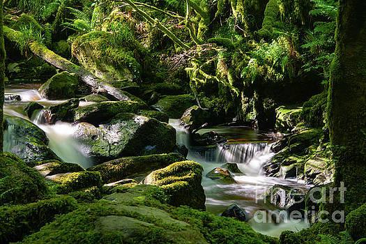Bob Phillips - Torc Waterfalls Two