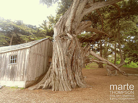 Tortured Cypress by Marte Thompson