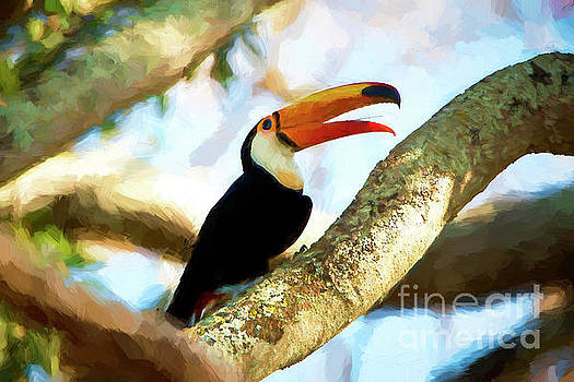 Pravine Chester - Toucan on a tree