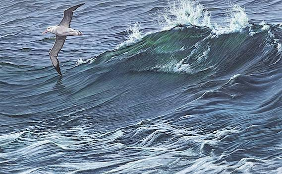 Touching the waves - Seabird painting by Alan M Hunt by Alan M Hunt