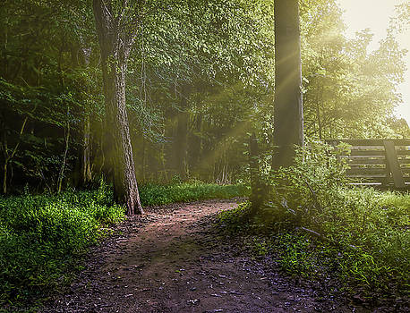 Towards The Light by Ant Pruitt