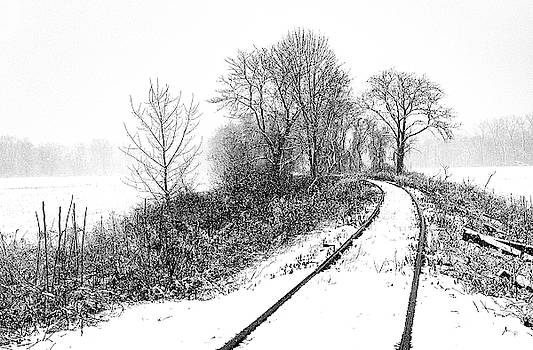 Tracks in Snow by Tom Romeo