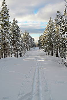 Tracks of a cross country skier on a forest lane by Intensivelight