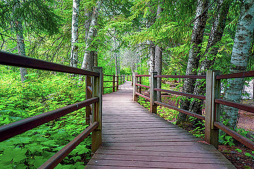Trail at Gooseberry Falls by Susan Rydberg