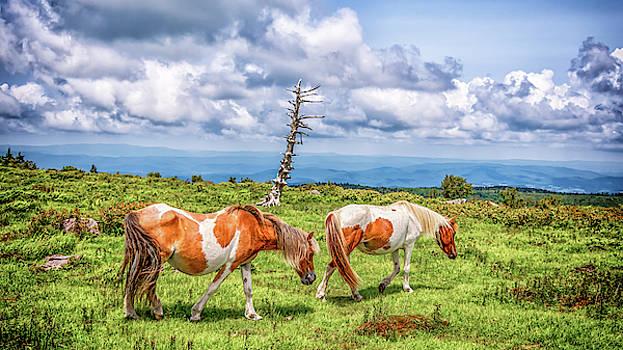 Chris Coffee - Trail of Ponies