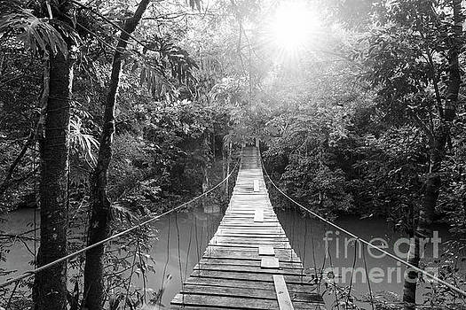 Tim Hester - Tranquil Forest Footbridge Black and White