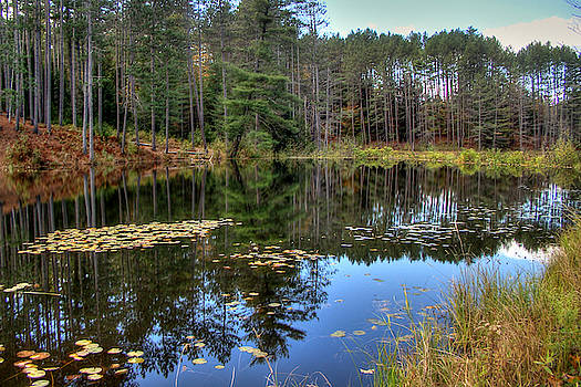 Tranquil Water by Betsy Zimmerli