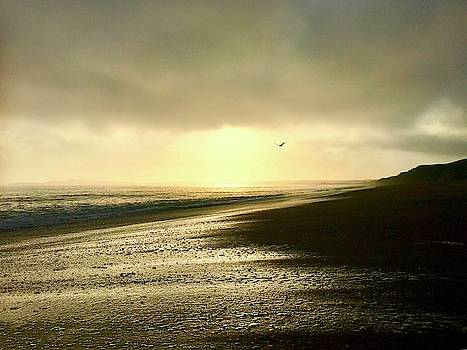 Tranquility of Point Reyes by Christina Ford