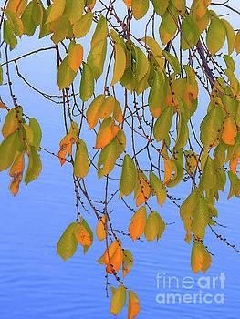 Treasures Of The Autumn Season Photography by Art Sandi