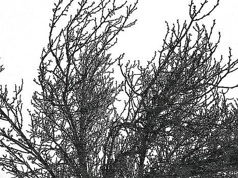 Tree 1 by Lan Kwon